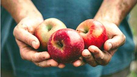 Äpfel_Artikelbild
