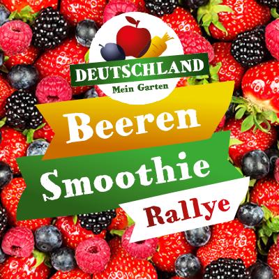 Beeren-Smoothie-Rallye