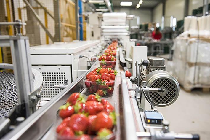 Erdbeeren Verpackungsband