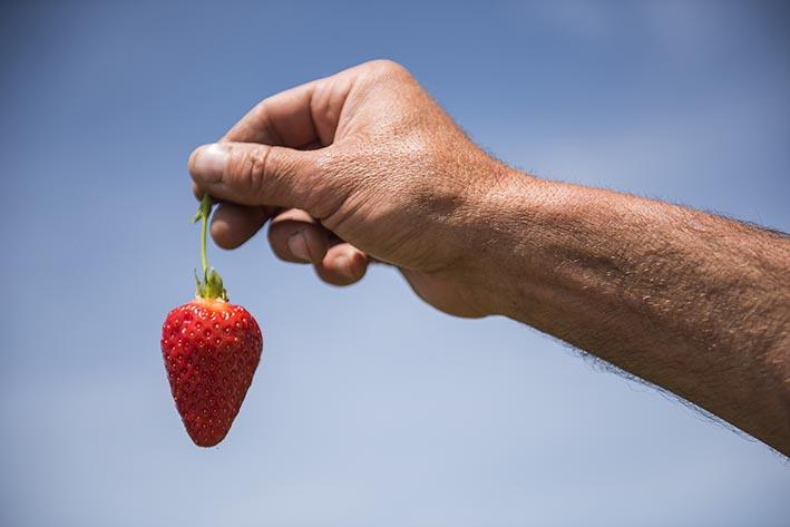 Erdbeeren blauer Himmel