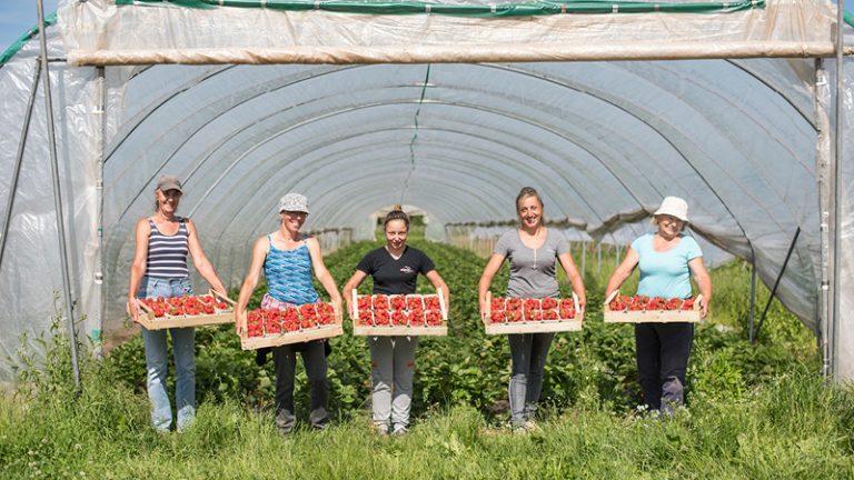Zieglerhof Erdbeeren, Mitarbeiter