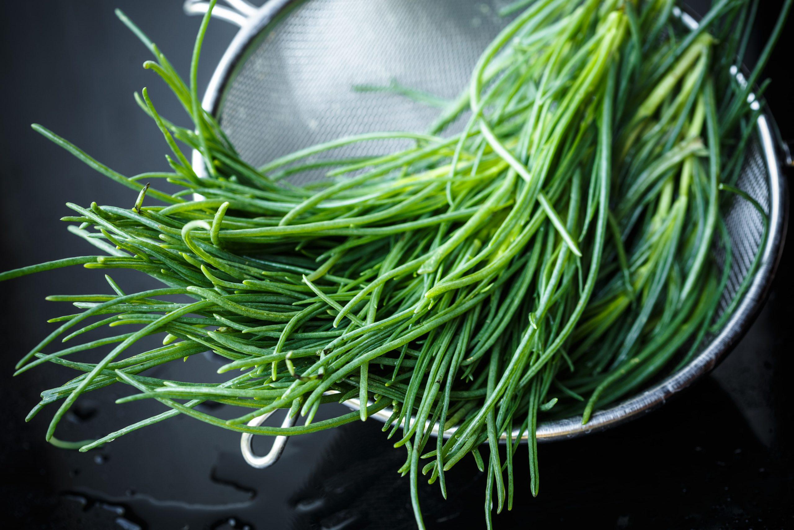 Unbekannte Gemüsesorte Mönchsbart