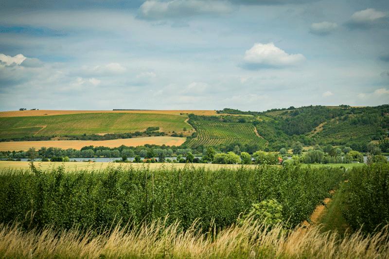 Anbaugebiet am Süßen See