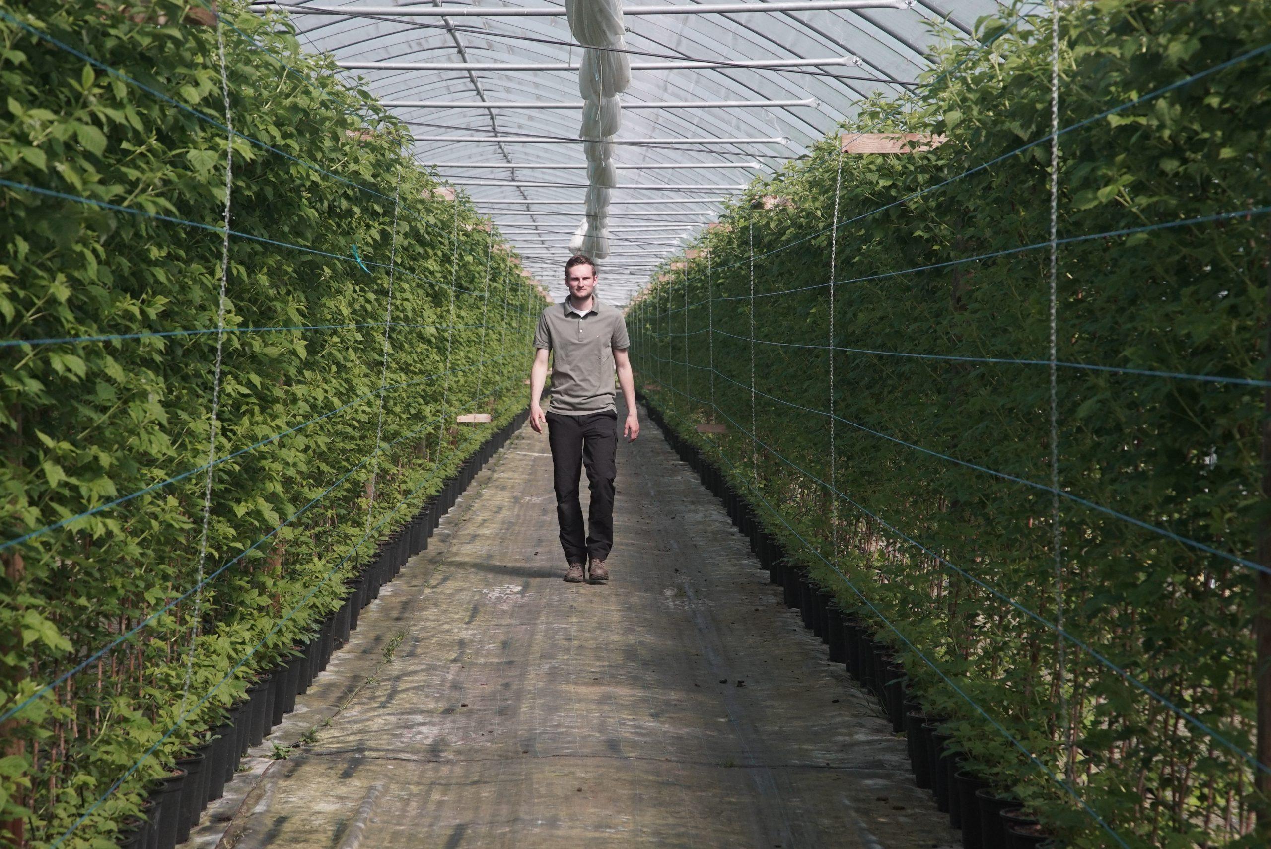 Andre Wohlers aus Langfördern erntet auch in der Corona-Zeit Erdbeeren