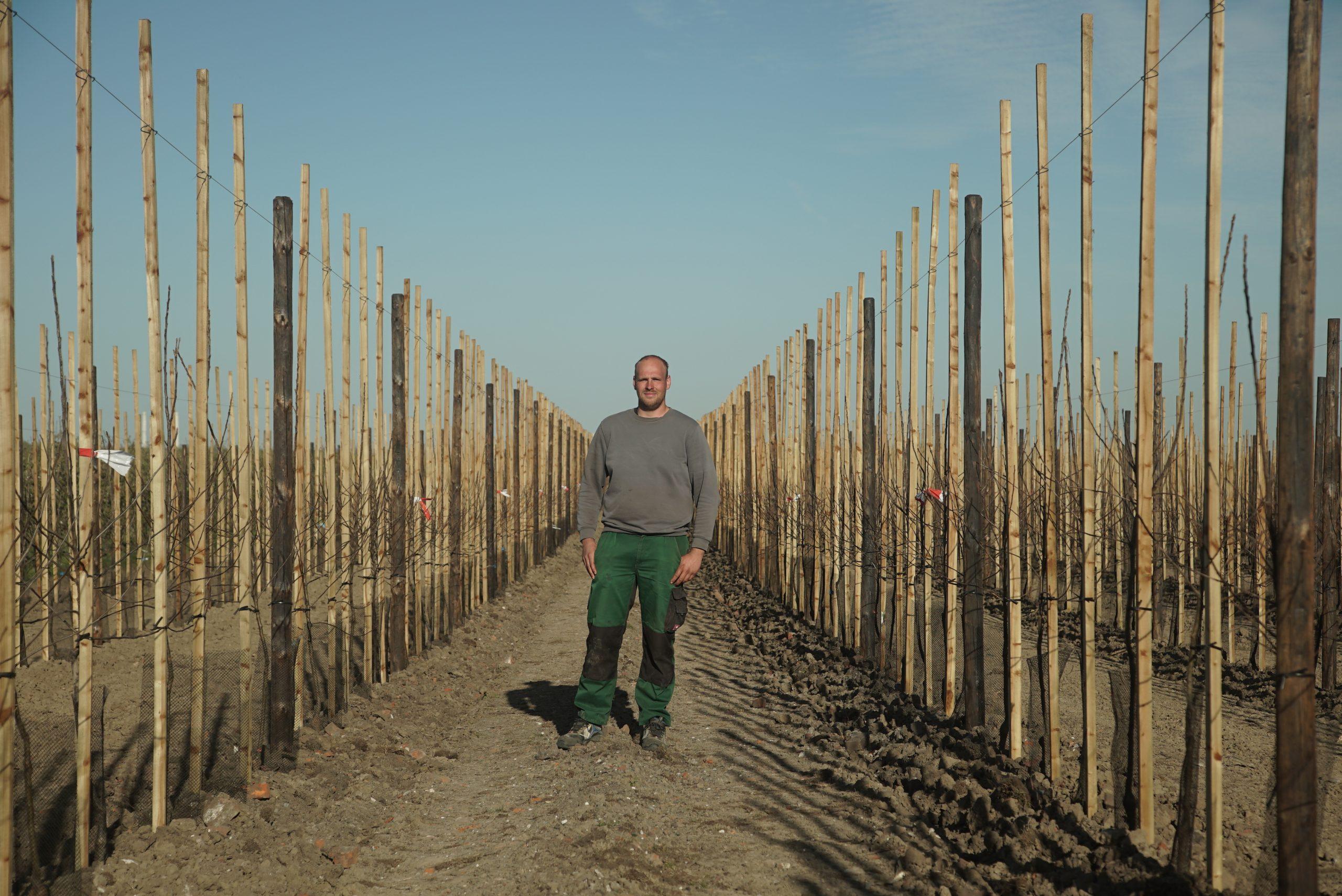 Jan Henrik Börger auf der neuen Apfelplantage in Mittelnkirchen